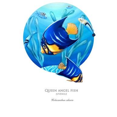 angelfishprint