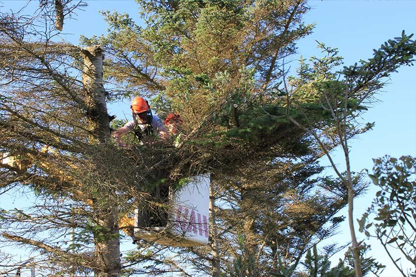 tree & shrub removal Toronto
