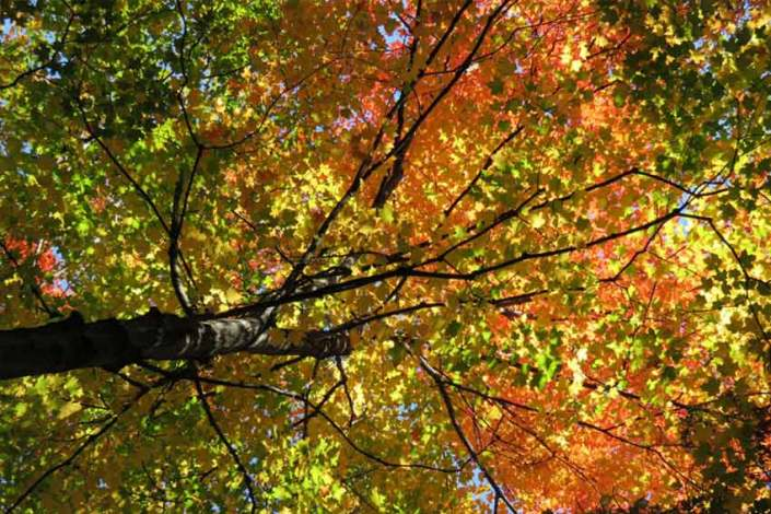 Tree Trimming Toronto