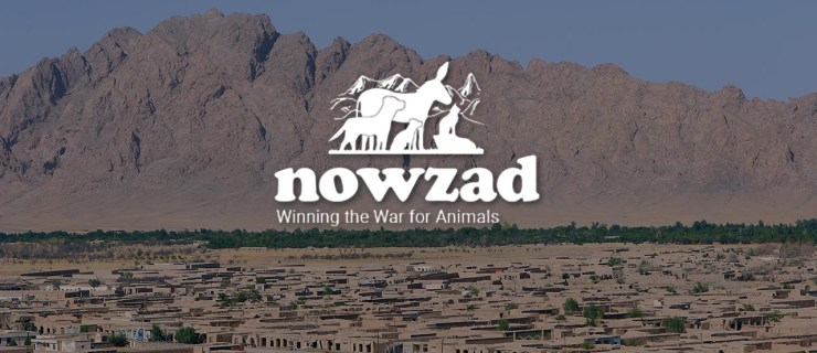 animal rescuers of afghanistan