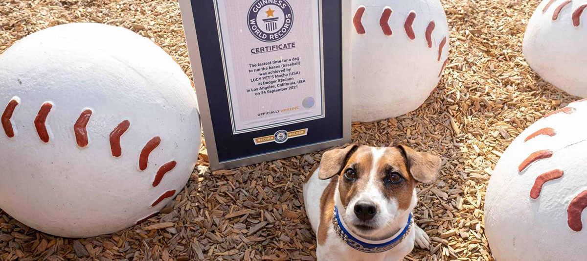 dog sets guinness world record