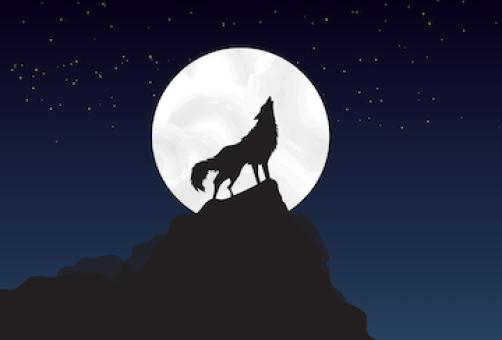 wolf-4561204_1280