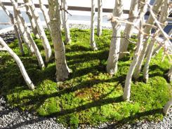 Arboretum JC 071_4000x3000