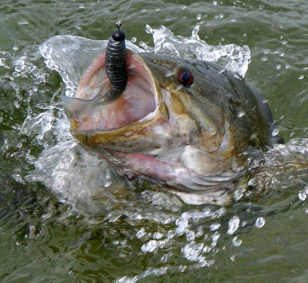 Smallie Fishing 101