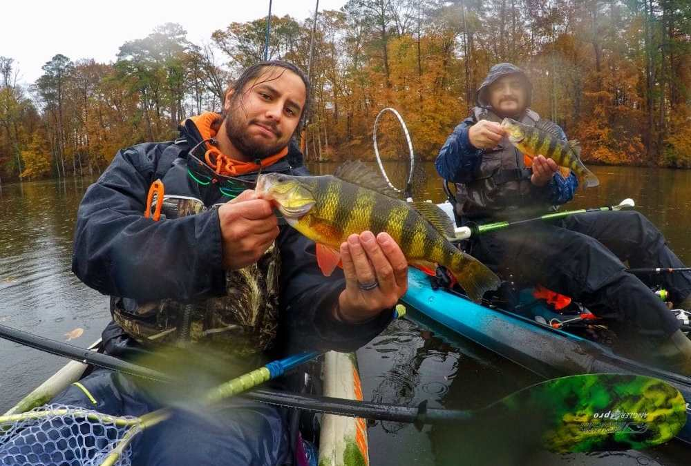 How to Catch Open Water Yellow Perch