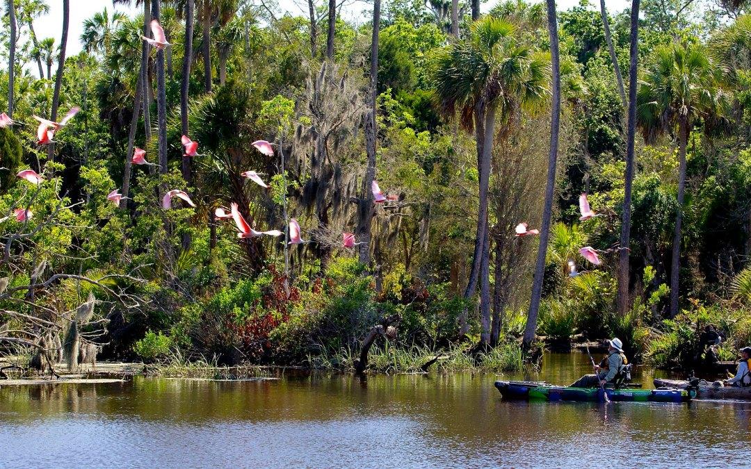 Kayak Fishing Levy County Florida
