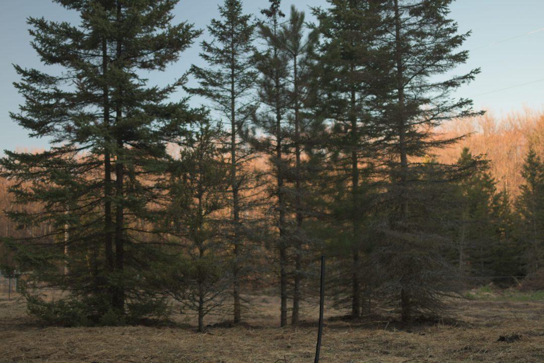 evening light on treeline from Jackson Station farm