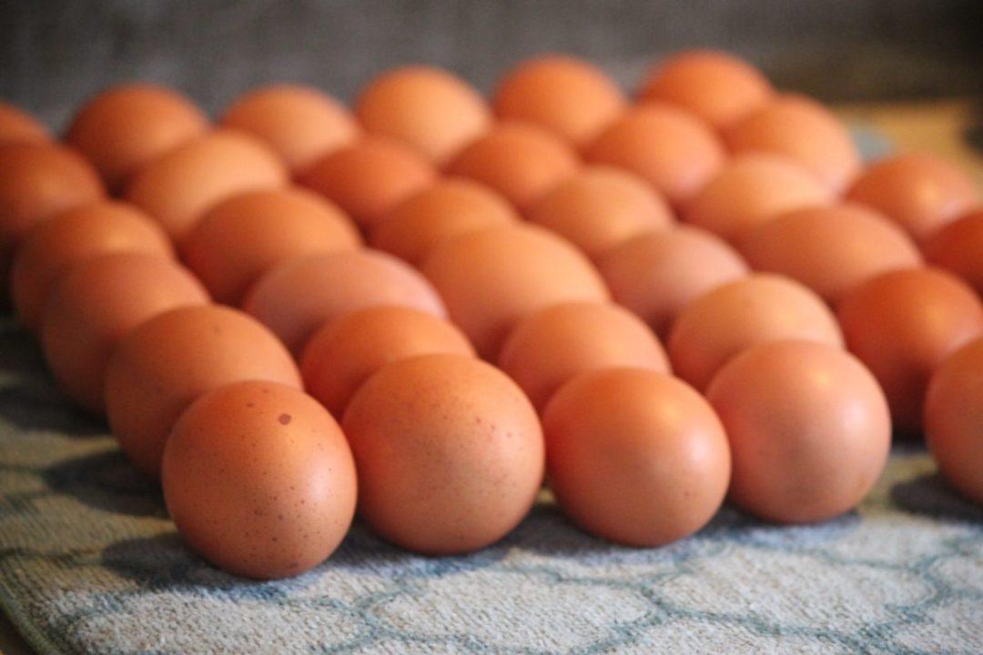 farm fresh brown eggs up close on drying mat
