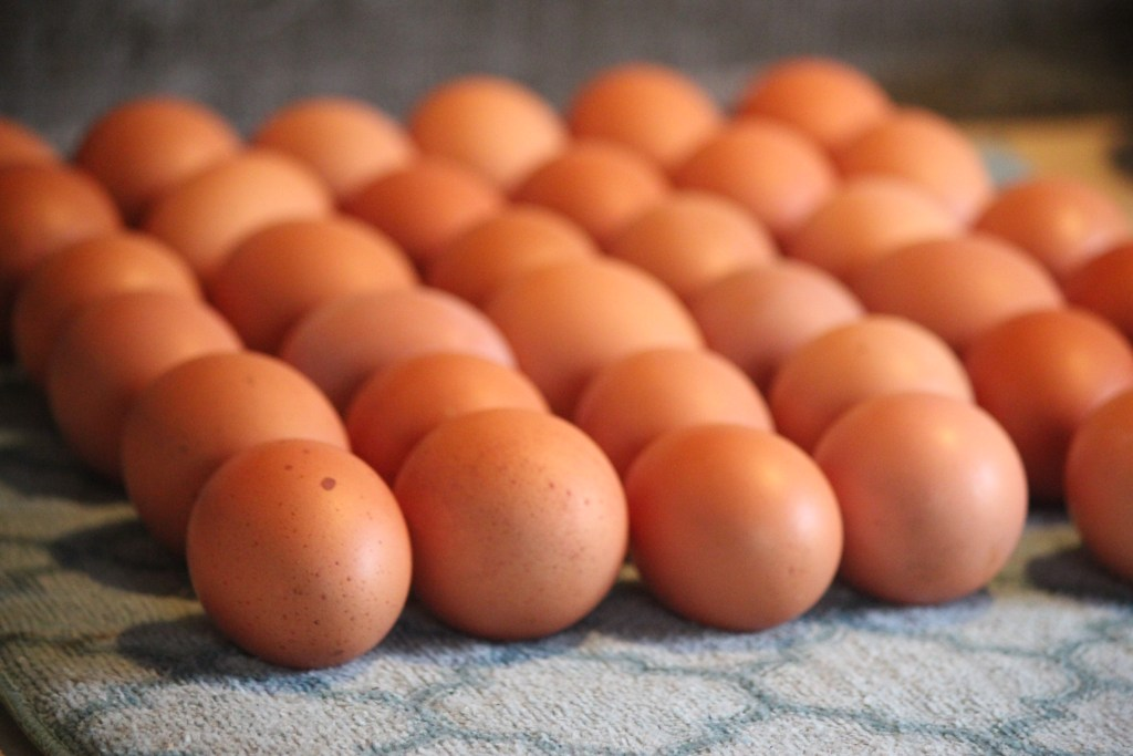 farm fresh brown eggs up close on drying mat