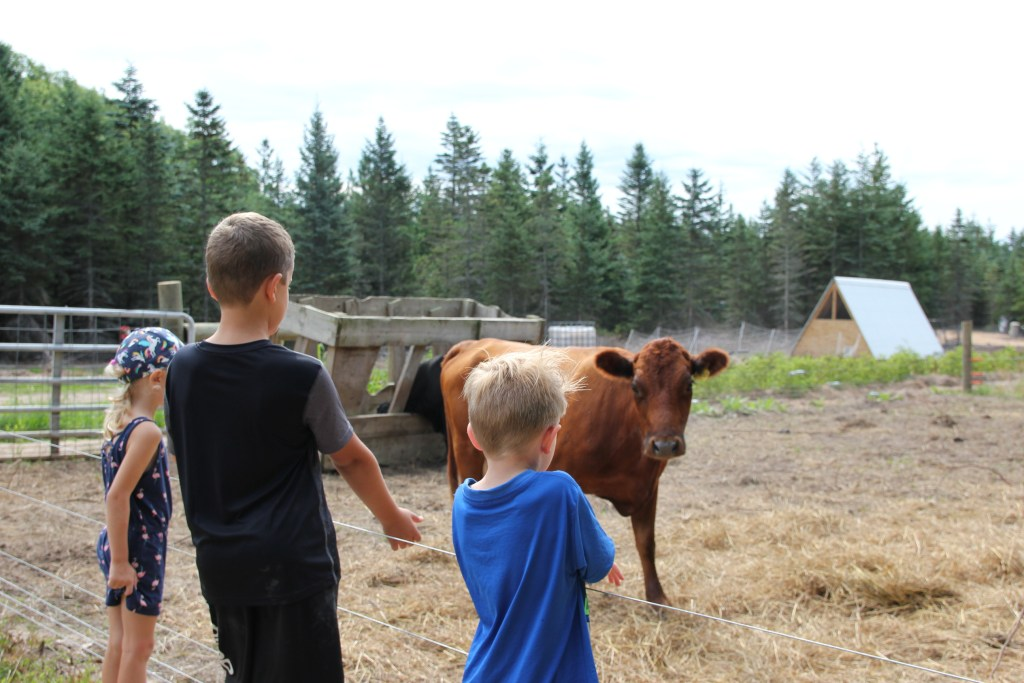 kids watching the cattle; farm tour and education
