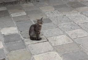 Cat, Kotor