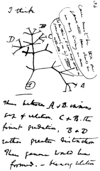 """The first evolutionary tree ever drawn, with the words """"I think"""" written above it, from one of Darwin's notebooks"""