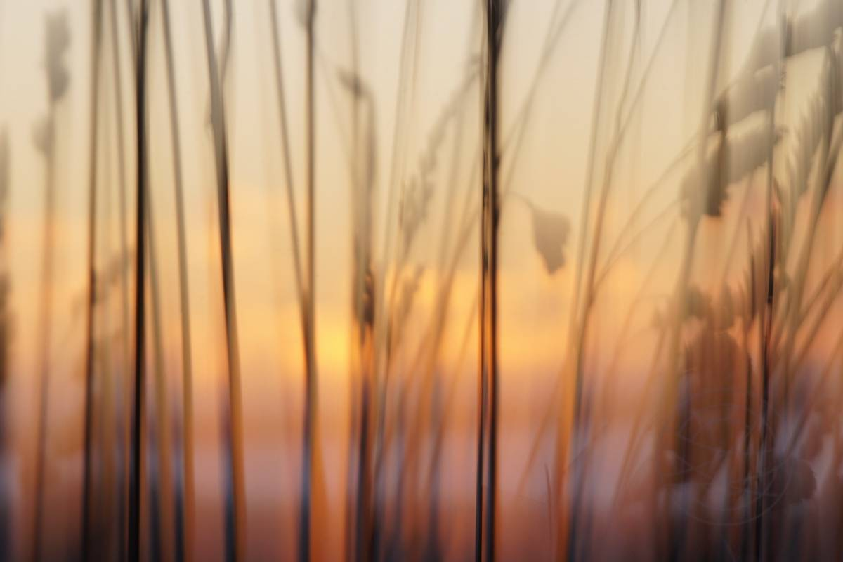 Autumn Grass (1) - Abstract realistic fine art nature photography by Jacob Berghoef