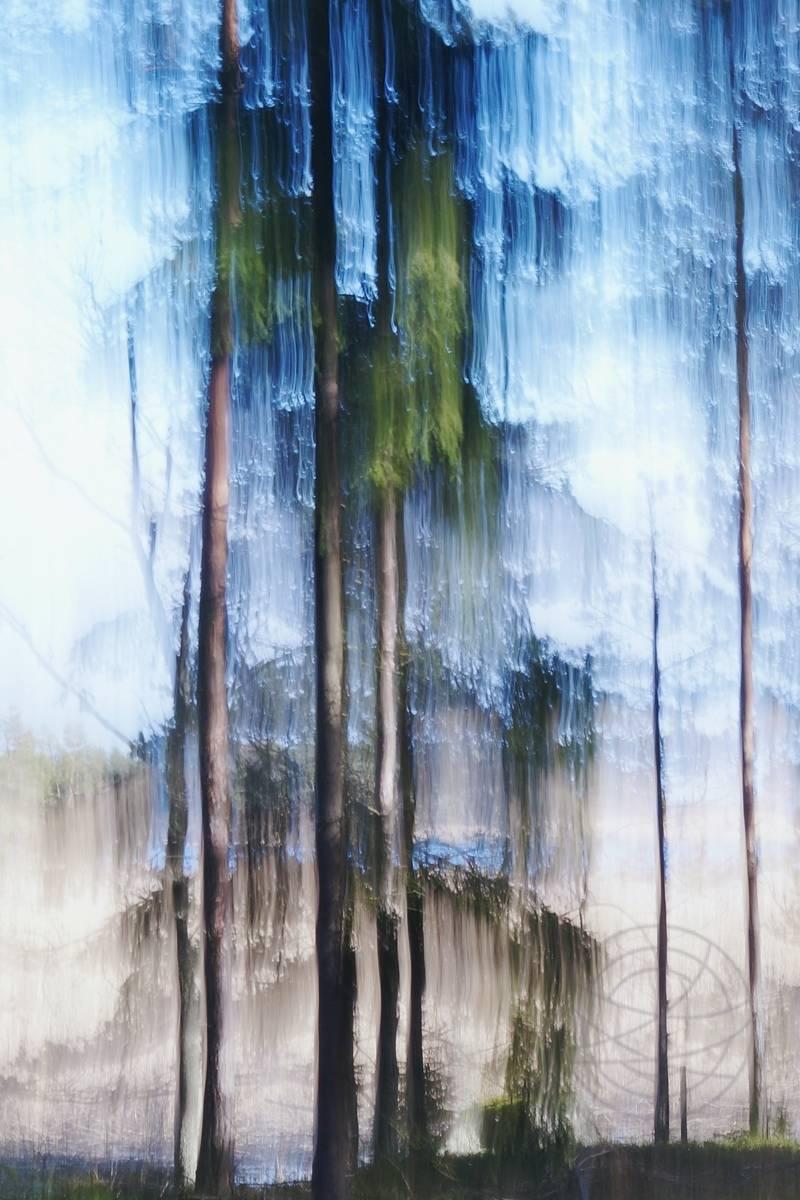 Crying Pine Tree (2) - Abstract realistic fine art forestscape photography by Jacob Berghoef