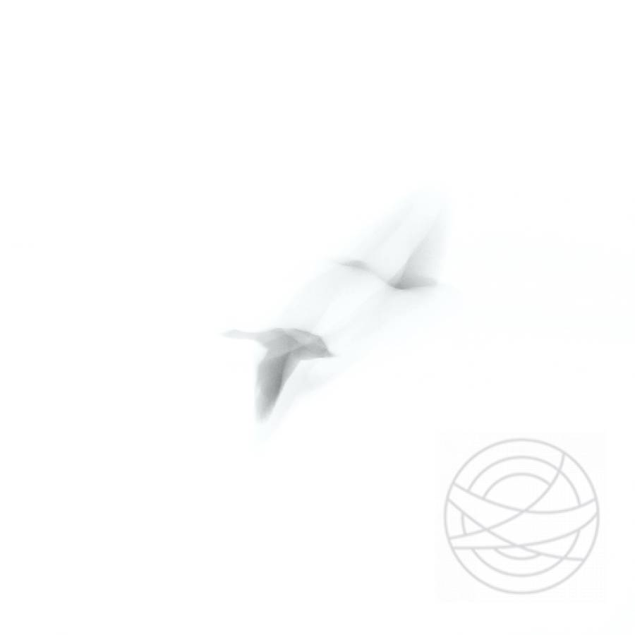 Evanescent - Abstract Realistic Fine Art bird photography by Jacob Berghoef
