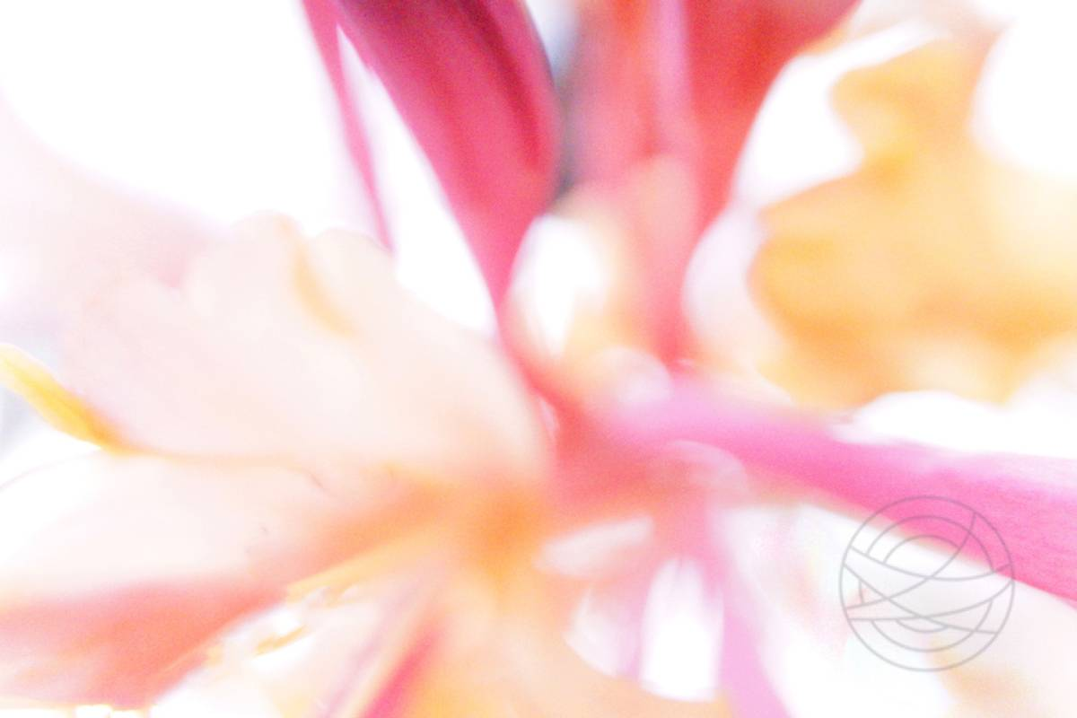 Flaming - Abstract realistic fine art nature photography