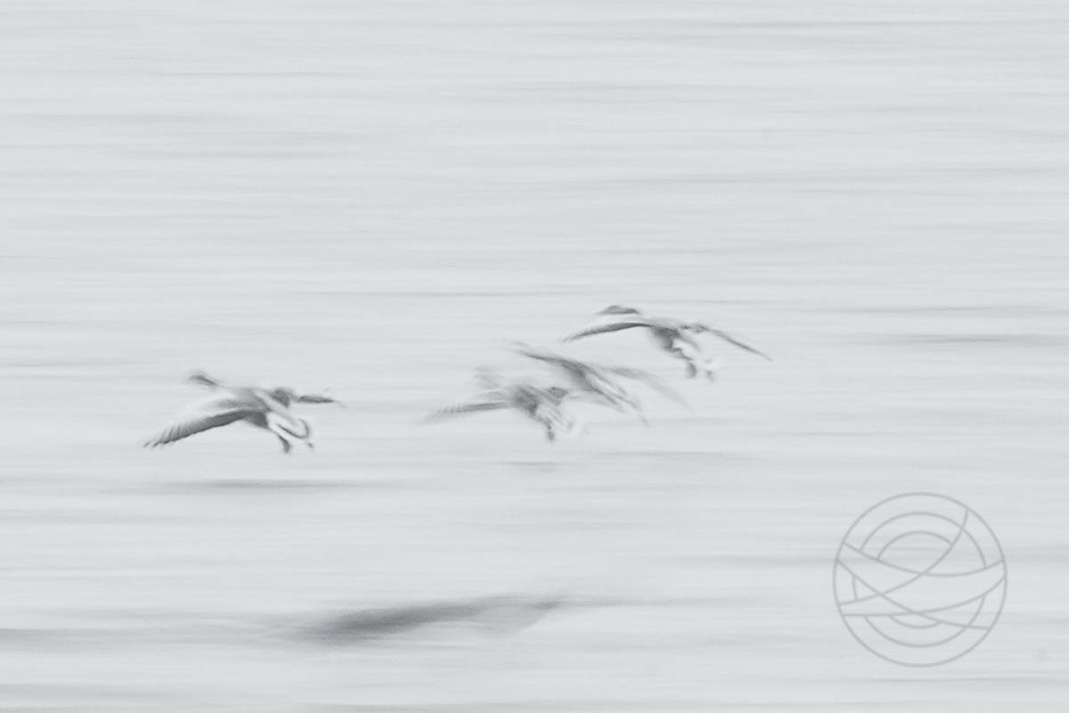 Jostling To Get The Best Spot - Abstract Realistic Fine Art bird photography by Jacob Berghoef