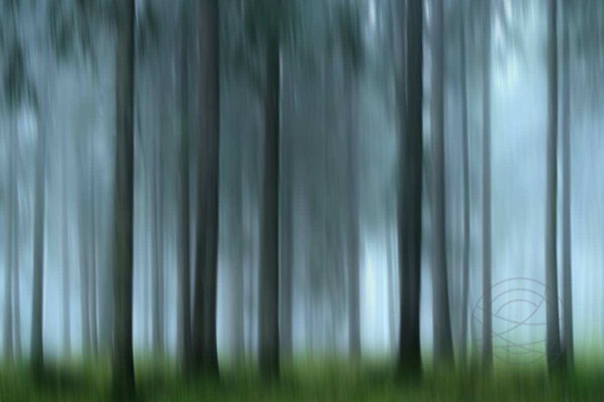 Lost In Memories - Abstract realistic fine art forestscape photography by Jacob Berghoef
