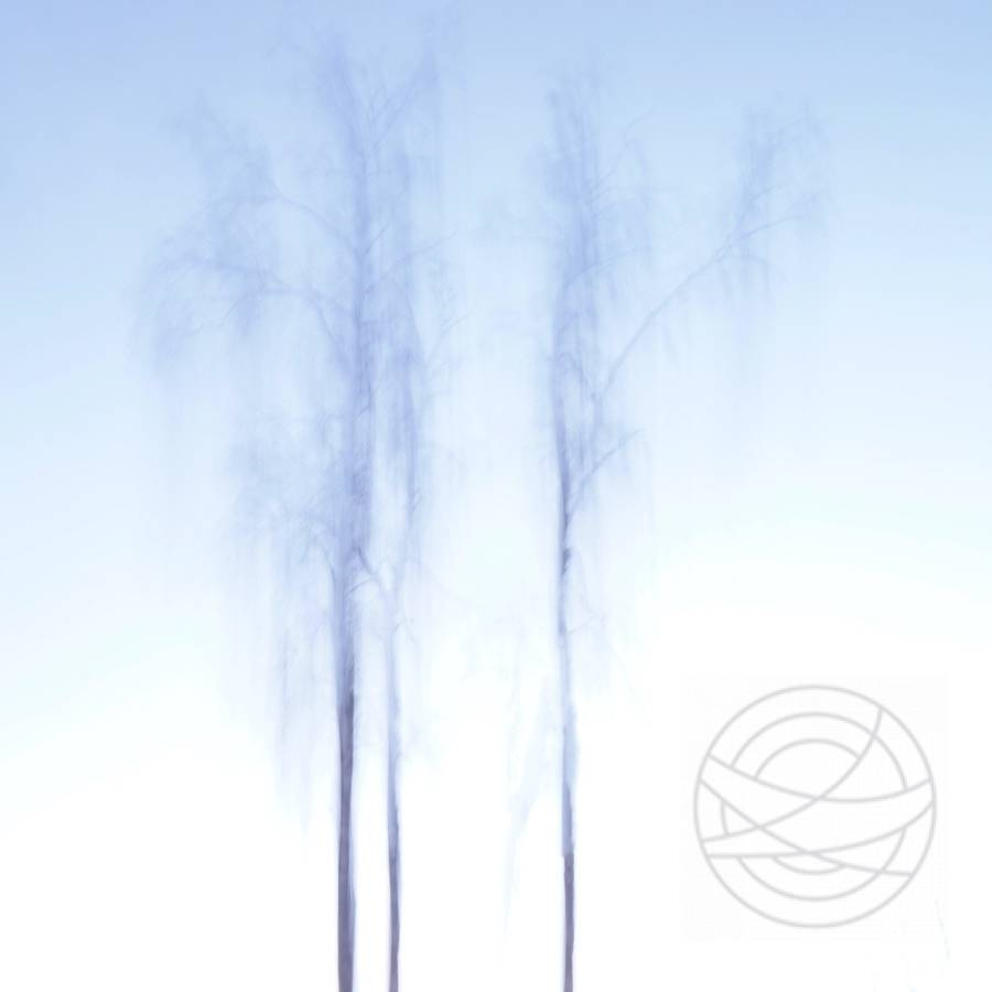 Reaching Deep Into The Sky - Abstract realistic fine art forestscape photography by Jacob Berghoef