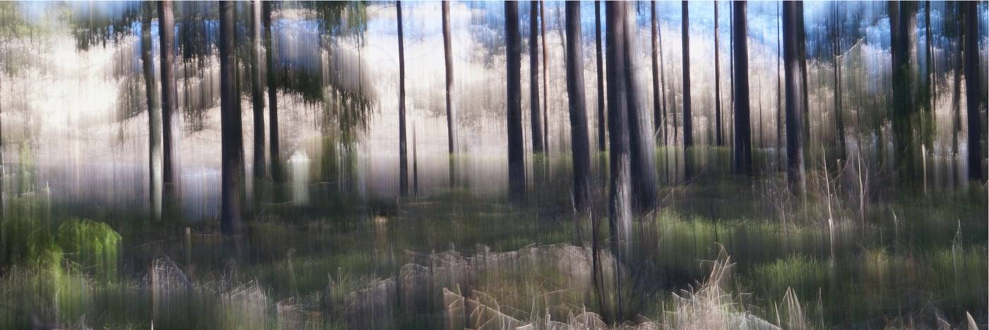 Silent Darkness - Abstract realistic fine art forestscape photography by Jacob Berghoef