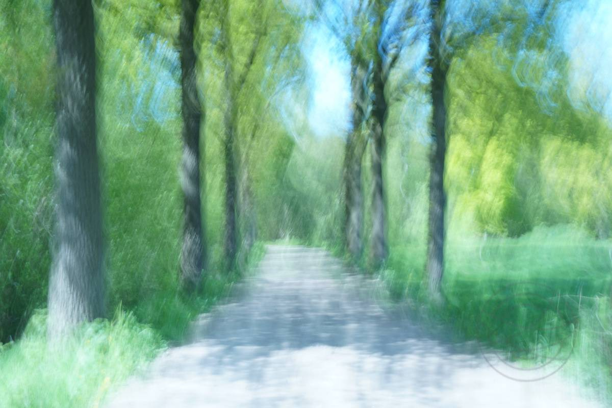 Strolling On A Leafy Lane - Abstract realistic fine art forestscape photography by Jacob Berghoef
