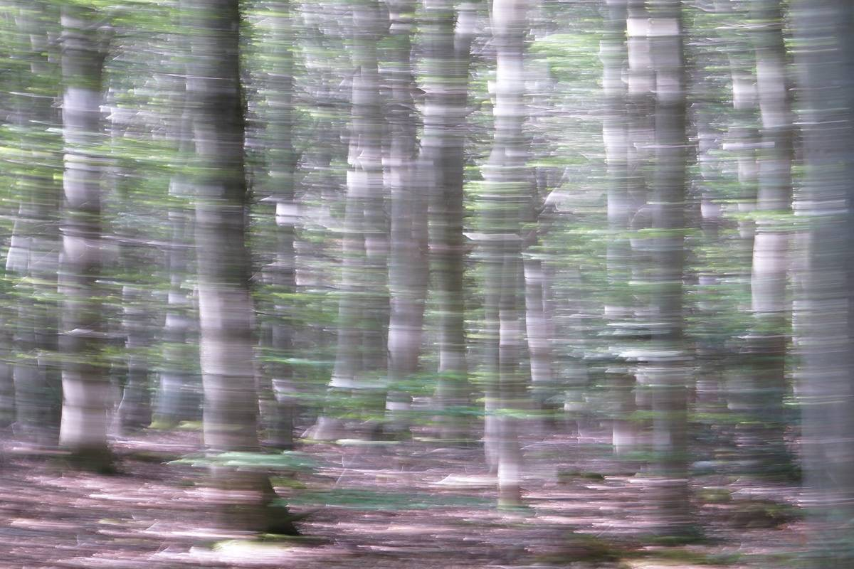 Summer Winds - Abstract realistic fine art forestscape photography by Jacob Berghoef
