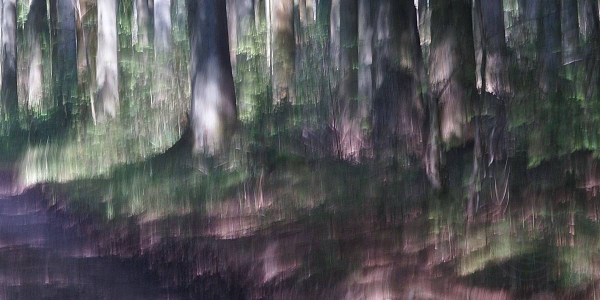 Tickled By The Sun - Abstract realistic fine art forestscape photography by Jacob Berghoef