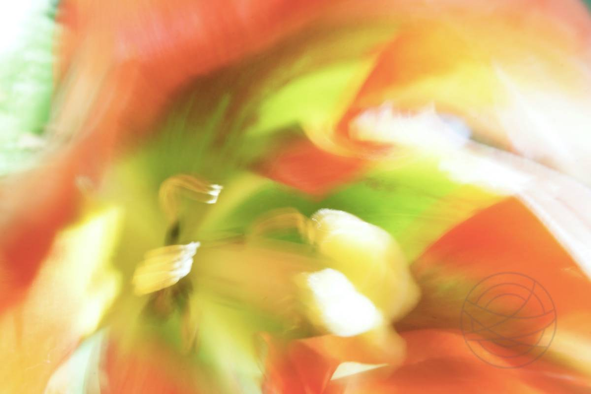 Wild at Heart (1) - Abstract realistic fine art nature photography