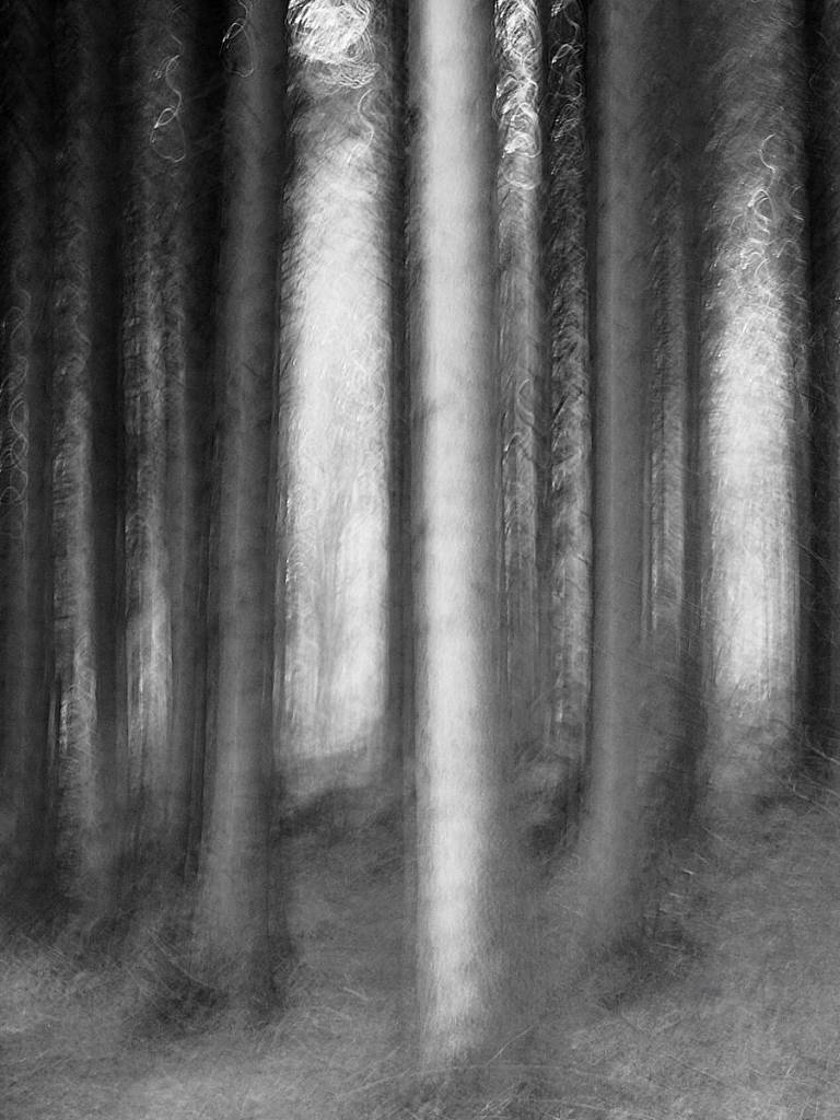 Abandoned Forest - Abstract realistic and impressionistic fine art nature photography by Jacob Berghoef