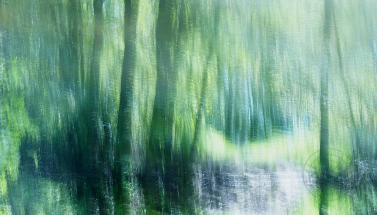 Float into the light - - Sunlight playing with shadows on the water of a pond - Abstract realistic fine art landscape photography by Jacob Berghoef