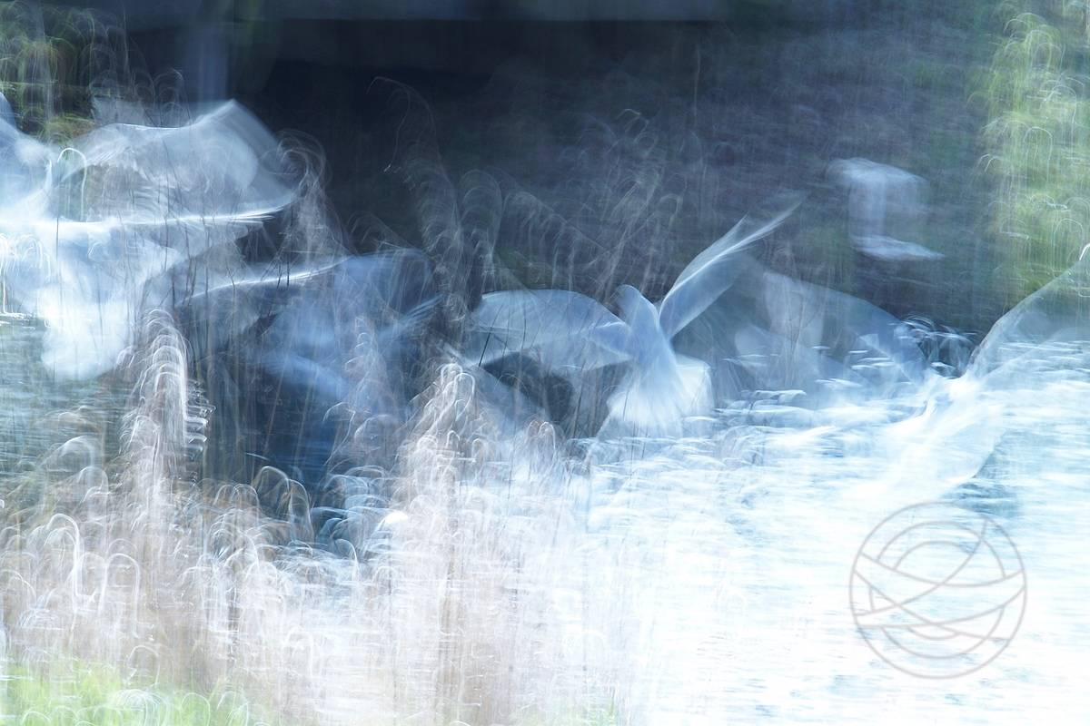 Disturbed Souls - A beautiful sunny winter day. A group of gulls fight each other for a piece of bread. - Modern impressionistic fine art nature photography by Jacob Berghoef