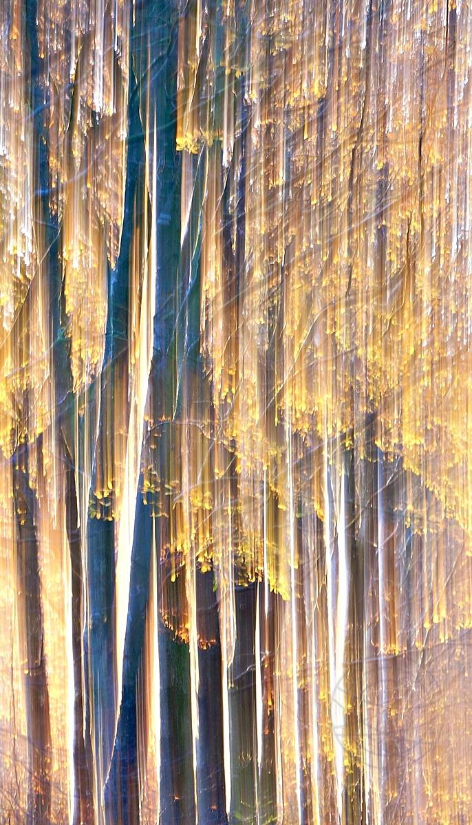 Wrapped In Gold - An autumn evening, yellow leaves gently fall to the ground. The sunlight wraps them in gold - Impressionistic fine art landscape photography by Jacob Berghoef