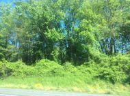 Typical Maryland landscape