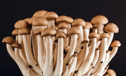 Leadership Secrets from Mushrooms Part 1