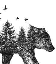 02_alfred-basha_bear