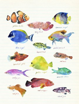 tropical-fish_900