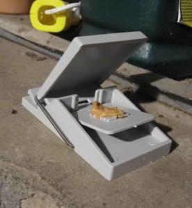 Mouse Trap1