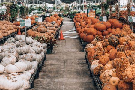 Cornelius Nursery Pumpkin Fest