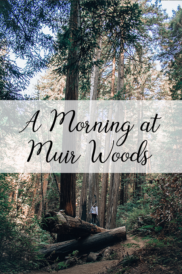 Hiking Muir Woods