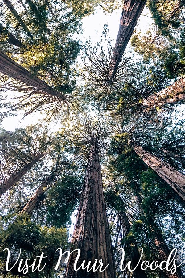 Visit Muir Woods