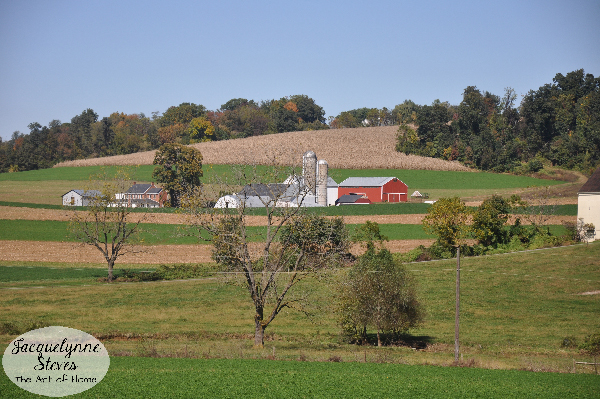 Amish Countryside- Jacquelynne Steves