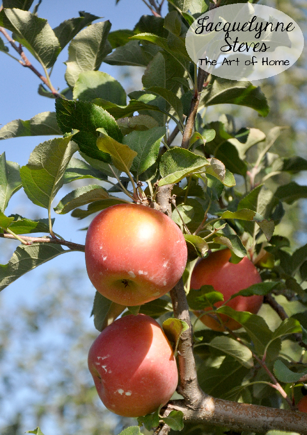 Apple Tree- Jacquelynne Steves