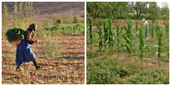 Agriculture familiale Maroc