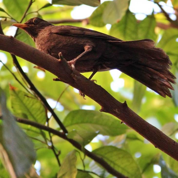 Salut l'oiseau réveil chanteur, l'œil aux aguets, toujours prêt à s'envoler