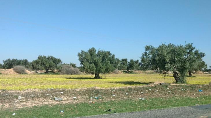 L'ancêtre qui travaille et mange comme six ! Sud tunisien