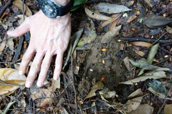 la trace du tigre... impressionante taille