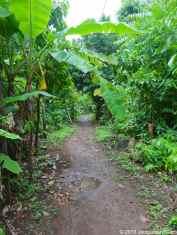 The road of Little Corn Island