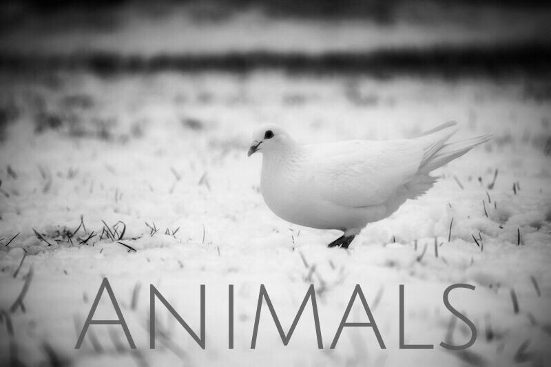 animal animals photography photos bw - Home