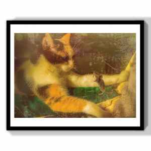 animal art cute photograph for gift