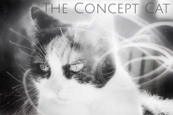 Art photo for cat lovers